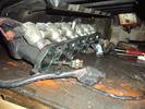 Впускной коллектор под газ в сборе : X20D1 для автомобиля Chevrolet Evanda